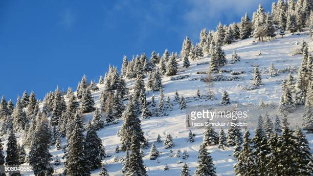 Trees On Snowcapped Mountain Against Sky