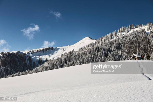 Trees on snowy mountainside