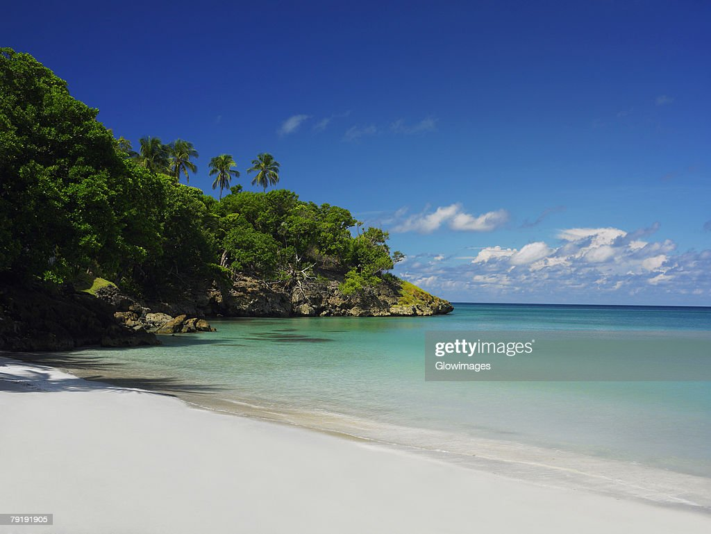 Trees on the beach, Providencia, Providencia y Santa Catalina, San Andres y Providencia Department, Colombia : Foto de stock