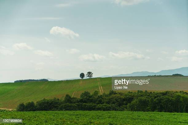 trees on the hill - liyao xie stock pictures, royalty-free photos & images