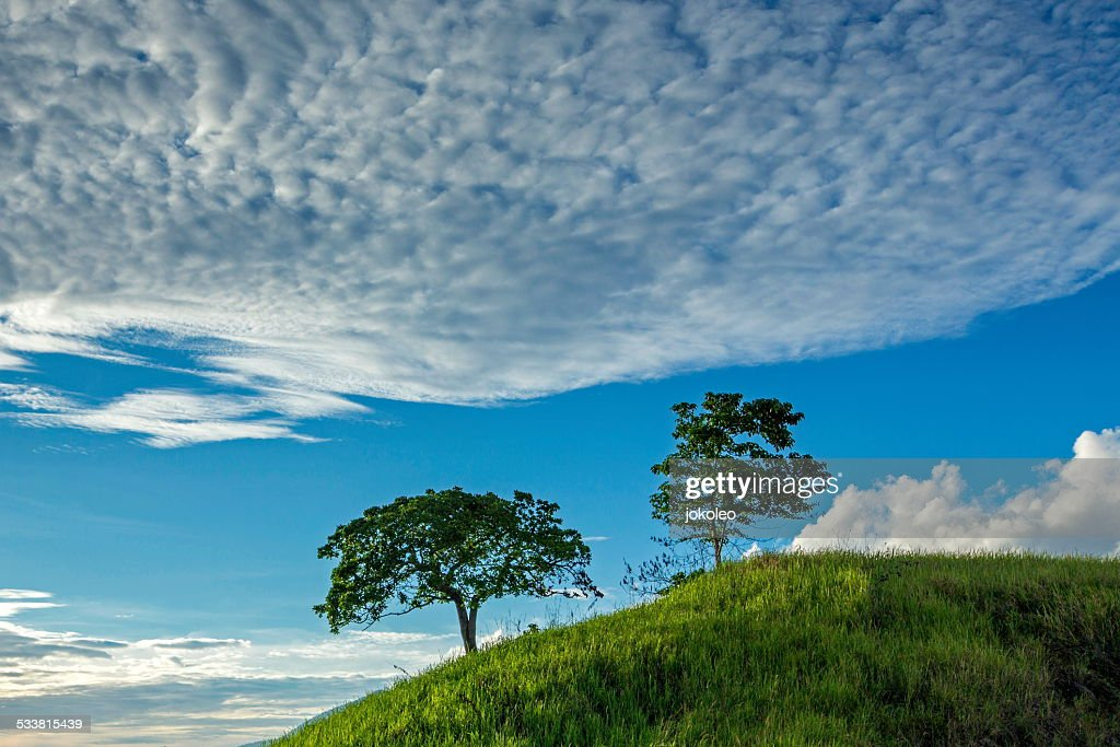 Trees on the hill : Foto stock