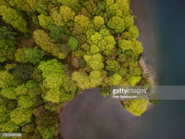 trees on the lake - sea stock pictures, royalty-free photos & images