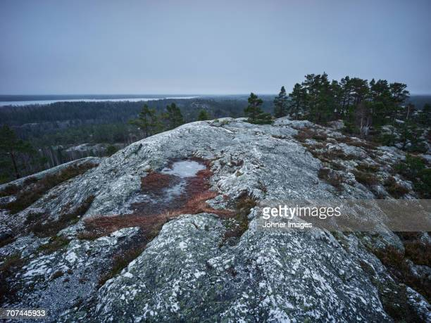 trees on top of mountain - dalsland stock photos and pictures