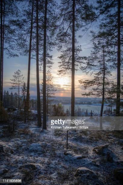 trees on top of the hill - lahti finland bildbanksfoton och bilder