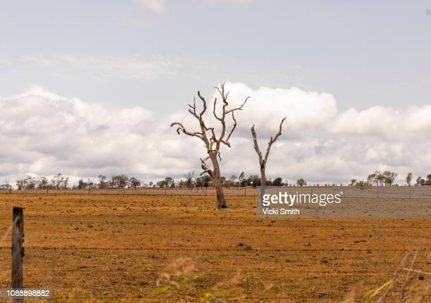 trees  out in the country - drought stock pictures, royalty-free photos & images