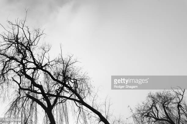 trees - bare tree stock pictures, royalty-free photos & images