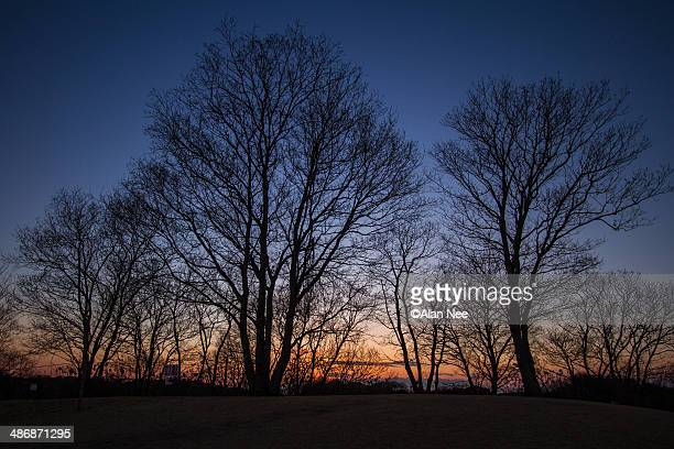 trees - nee nee fotografías e imágenes de stock