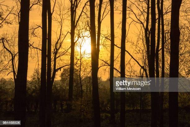 trees - william mevissen stockfoto's en -beelden