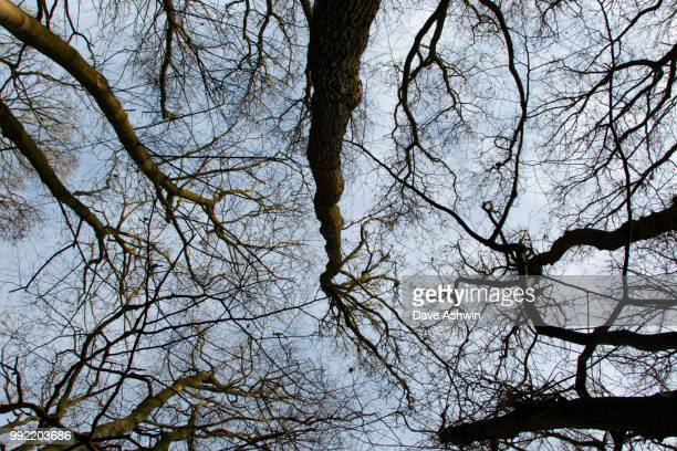 trees - dave ashwin stock pictures, royalty-free photos & images