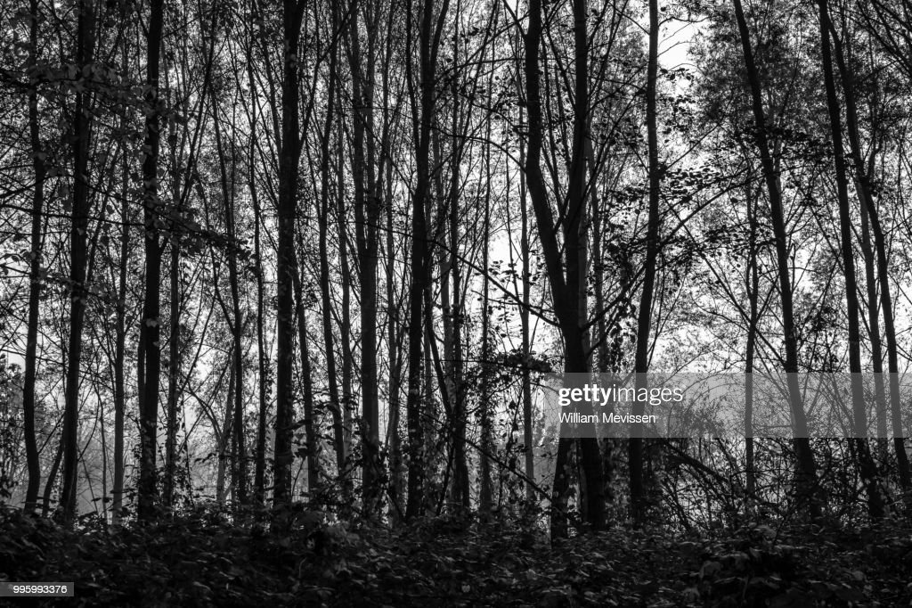 Trees : Stockfoto