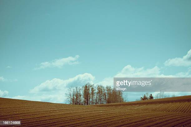 Trees planted in the middle of a field in a farm