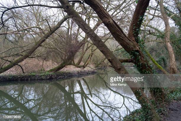 Trees refelcted in water on the River Brent on 25th January 2020 in London United Kingdom This area is an offshoot of the Grand Union Canal and...