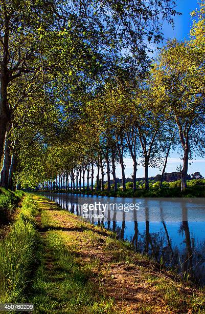 Trees reflect in the Canal du Midi