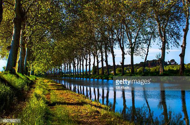 trees reflect in the canal du midi - canal du midi photos et images de collection