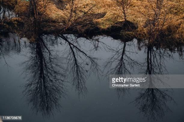 trees reflected in black river - black river falls wisconsin stock-fotos und bilder