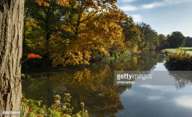 Trees reflected in river, Overijssel, Twente, Holland