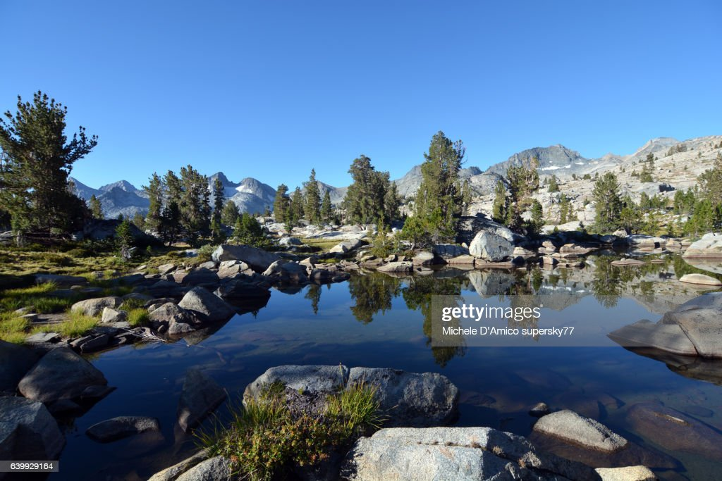 Trees reflecting in a pond in the High Sierra : Stock Photo