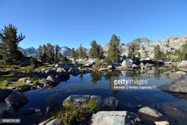 trees reflecting in a pond in the high sierra - john muir trail stock photos and pictures