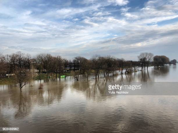 trees reflecting in rhine river after  flooding in cologne - rhine river stock pictures, royalty-free photos & images