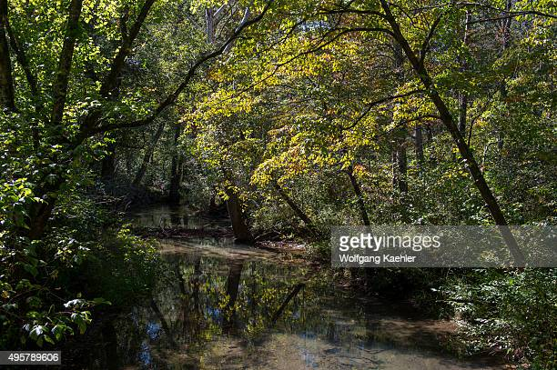 Trees reflecting in the water of a creek in Cades Cove Great Smoky Mountains National Park in Tennessee USA