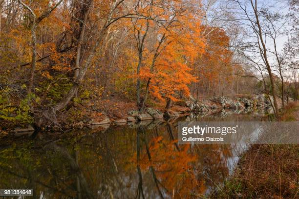 trees reflecting in water, chesapeake and ohio canal national historical park, potomac, maryland, usa - potomac maryland stock pictures, royalty-free photos & images