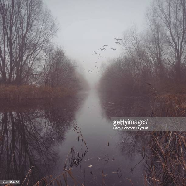 Trees Reflecting On Calm Lake At Forest During Foggy Weather