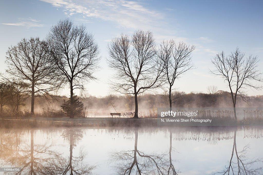Trees reflection in pond : ストックフォト