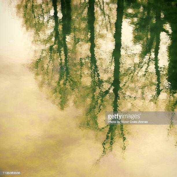 trees reflection on a river water resembling an oil painting in segovia, spain - victor ovies fotografías e imágenes de stock