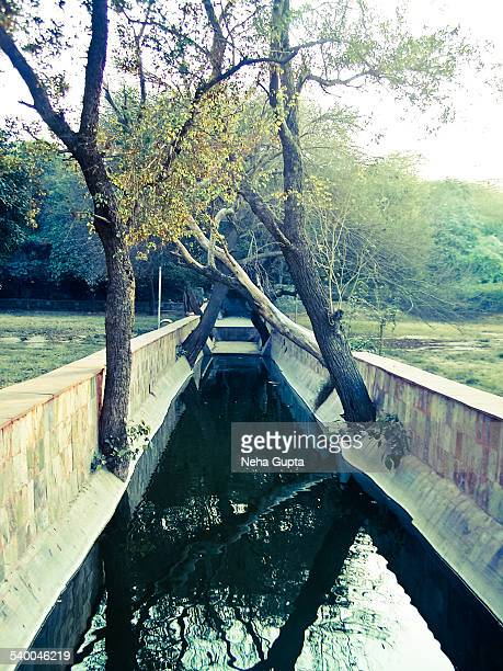 trees reflection - neha gupta stock pictures, royalty-free photos & images