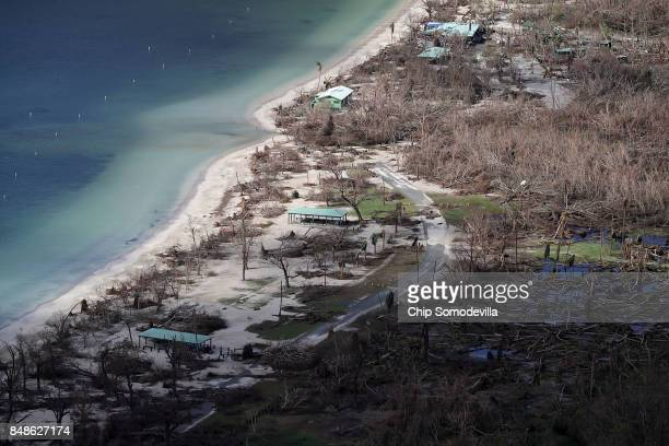 Trees remain windblow and stripped of their leaves on Magens Bay Beach more than a week after Hurricane Irma made landfall September 17, 2017 in...