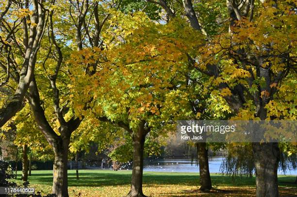 Trees resplendent in autumn colours catch the sun beside Linlithgow Loch on the day the clocks changed from British Summer Time on October 27 2019 in...