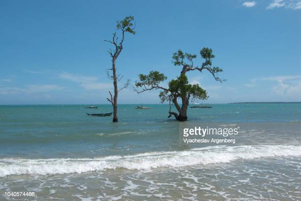 trees rising out of the sulu sea, beautiful palawan seascape, remote location near the south verde island, philippines - argenberg stock pictures, royalty-free photos & images