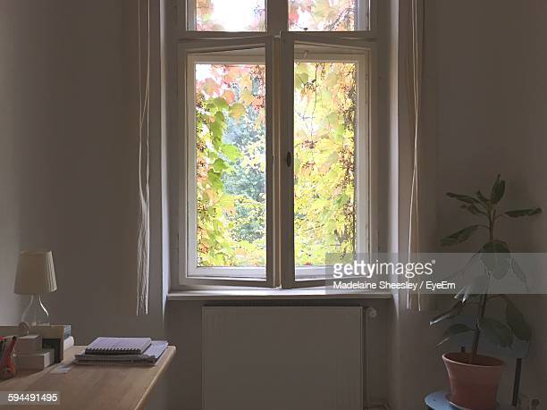 Trees Seen Through House Window