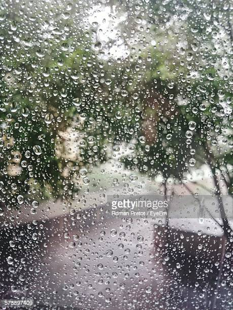 trees seen through wet glass window on rainy day - roman pretot stock-fotos und bilder