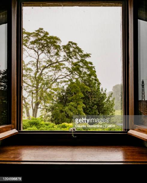 trees seen through window - window frame stock pictures, royalty-free photos & images