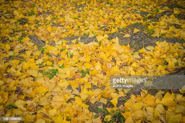 Trees seen with autumn leaves during fall season in inuyama Aichi