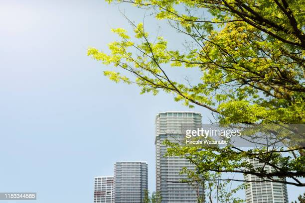 trees shining in spring sun beam in front of high rise apartments - 青々とした ストックフォトと画像