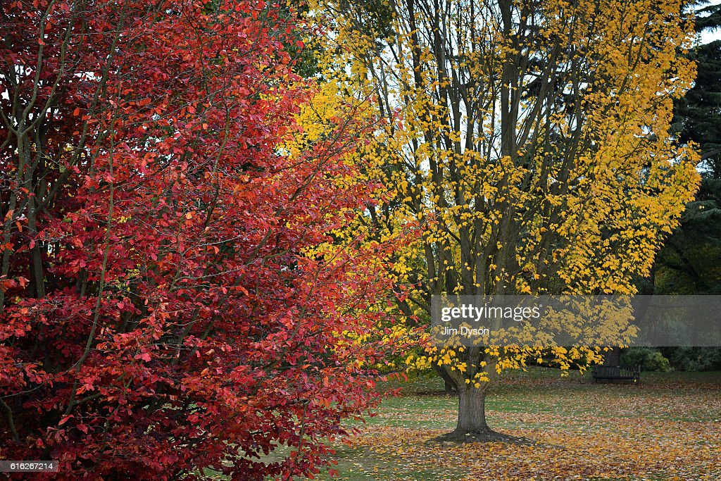 Trees show their Autumn colours at Kew Gardens on October 21, 2016 in London, England.