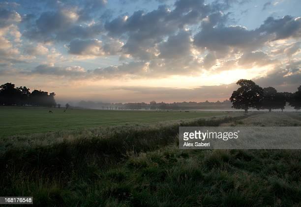 trees silhouetted against a dramatic sky at dawn. - alex saberi stock-fotos und bilder