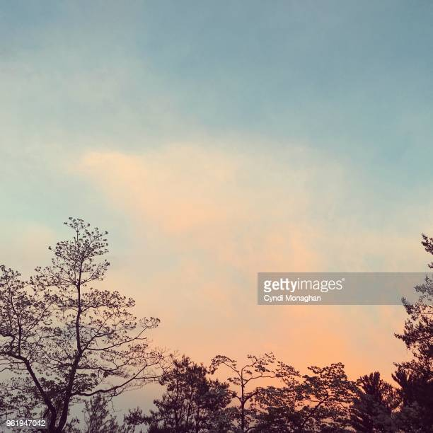 trees silhouetted against a sunset sky - romantic sky stock pictures, royalty-free photos & images