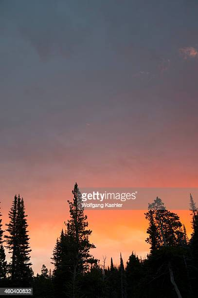 Trees silhouetted against morning sky at Two Medicine Lake on the eastern edge of Glacier National Park Montana United States