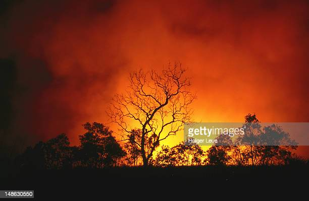 trees silhouetted by bushfire. - australia fire stock pictures, royalty-free photos & images