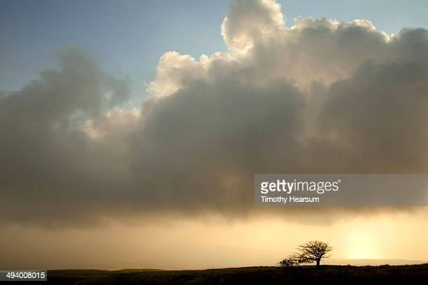 trees silhouetted in sun as clouds/fog roll in - timothy hearsum stock pictures, royalty-free photos & images