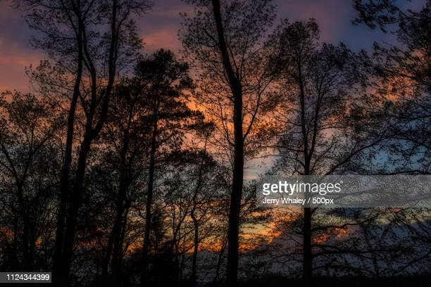 Trees Silhouetted