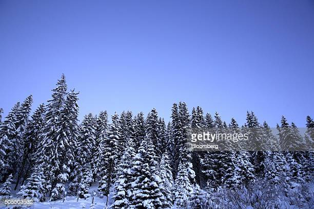 Trees stand covered in snow as they stand on the mountains above Davos Switzerland on Monday Jan 18 2016 World leaders influential executives bankers...