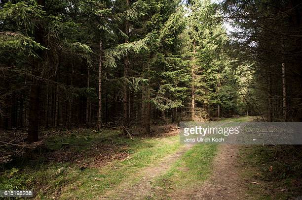 Trees stand in the forest where the remains of Peggy Knobloch a nineyearold murdered in 2001 were found in 2015 on October 17 2016 near Rodacherbrunn...