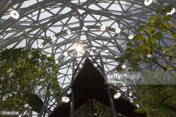 Trees stand inside the Amazoncom Inc Spheres in Seattle Washington US on Tuesday Jan 23 2018 The online retailer is scheduled to unveil the spheres...