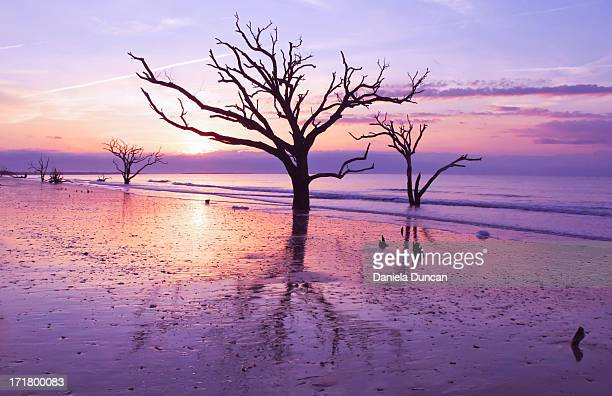 trees standing still - resilience stock photos and pictures
