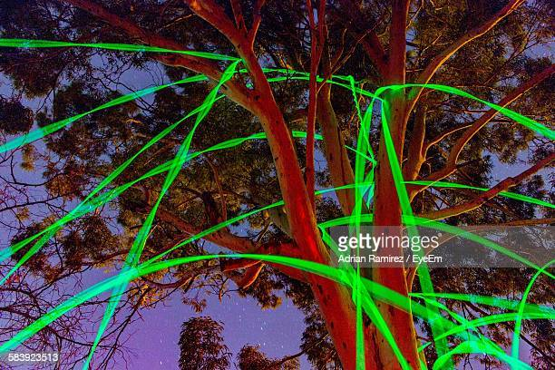 Trees Surrounded By Glow Sticks In Motion