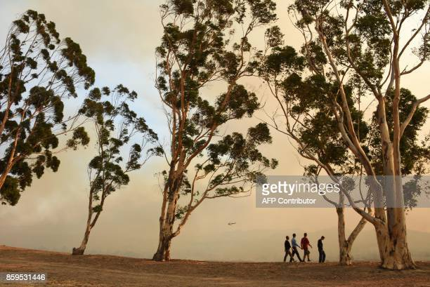 Trees sway in the Santa Ana Winds as a smoke rises from the Canyon Fire 2 October 9 2017 in Orange California / AFP PHOTO / Robyn Beck